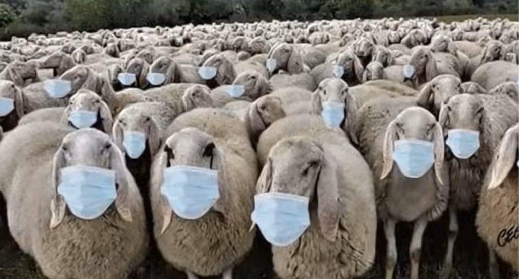 sheep-1024x550-1024x550.jpg